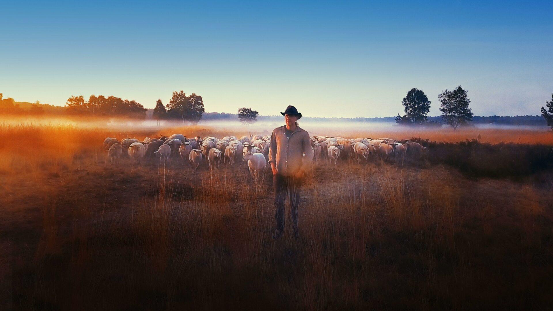 """Résultat de recherche d'images pour """"""""Sheep Hero""""(Ton Van Zantvoort film photos"""""""